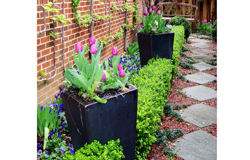 Garden Designs By- The Fellows