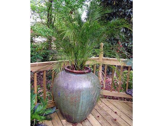 Palm in rustic green Bengal Jar