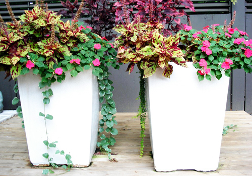 Featuring the real beauty of pure white by- Intown Landscape