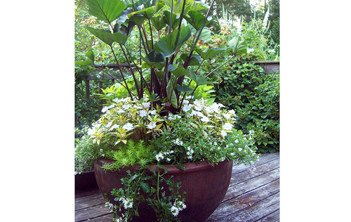 Container Gardening By- Bernie