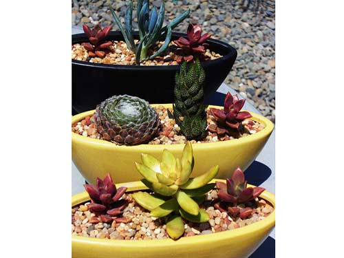 Succulent arrangement by: David Le