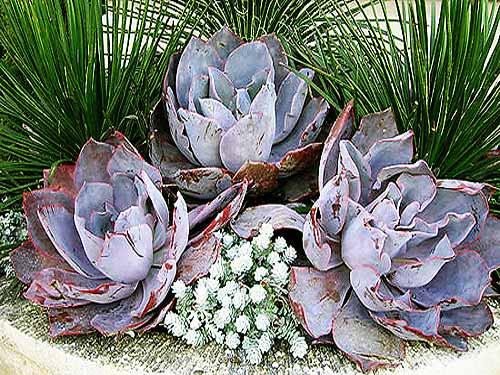 Floral Arrangement By: Living Green