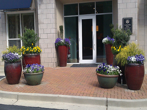 Great container gardening is most appropriate for yard with limited space.