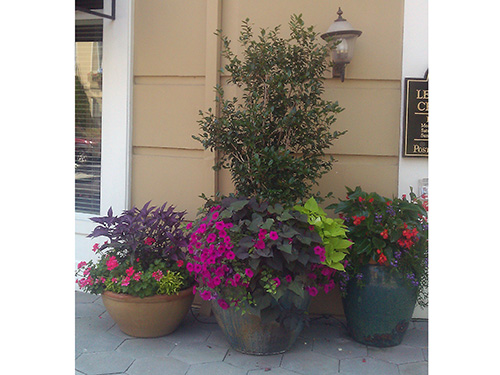 A clusters of assorted shapes and sizes container gardening surely adds an enticing feel to your dream garden.