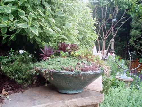 Low rustic wok shape bowl for succulents.
