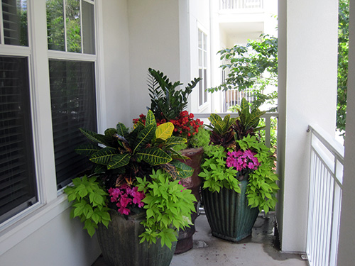 Container Gardening – By JD