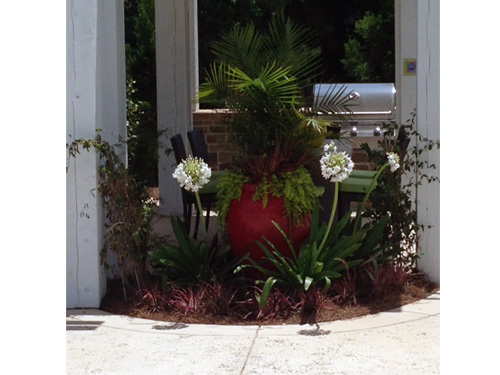 Fiesta lipstick red- container gardening pops up your lobby or backyard.Fresh spring look.
