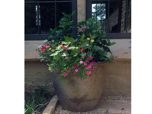 Container gardening make simple by – Greg Arnold