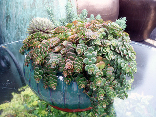 Succulent made simple in AW's emerald green pot