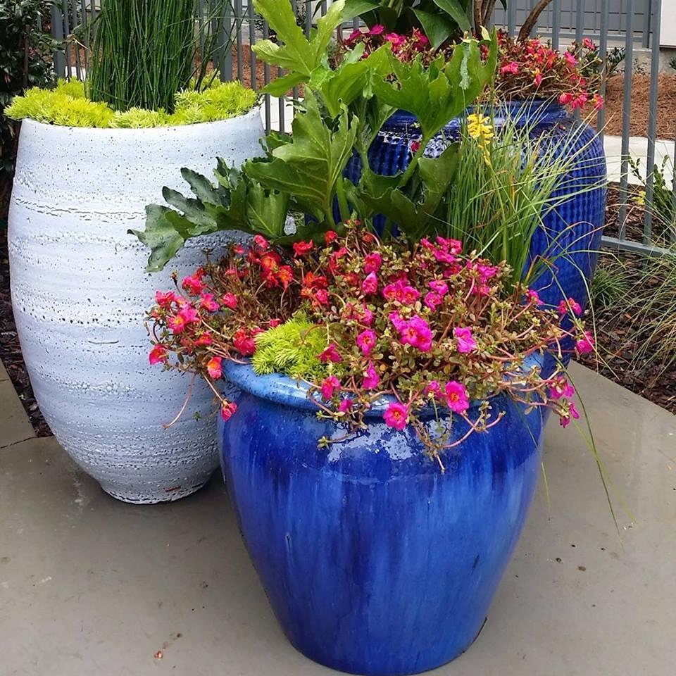 Blue & Coral planters